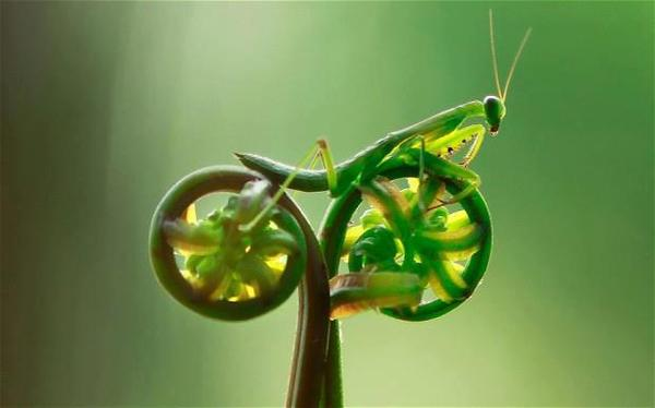 Mantis_Bike.jpg