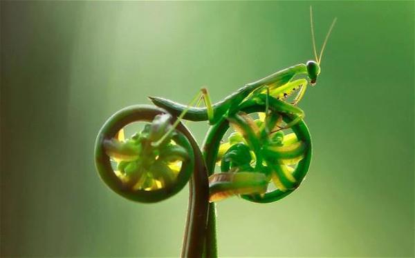 Mantis_Bike.jpg